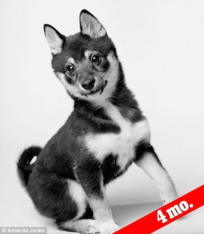 Fotógrafa cria série mostrando a transformação dos cães filhotes em idosos